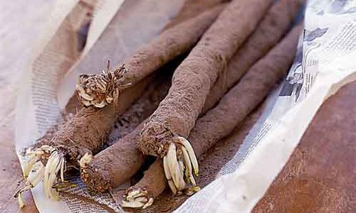 Salsify from T H Brown and Son