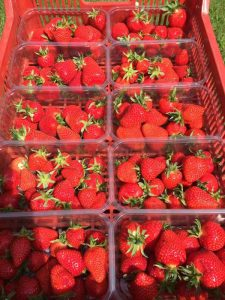 strawberries from TH Brown & Sons