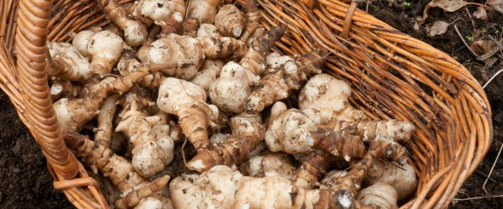 Jerusalem Artichokes from T H Brown and Son
